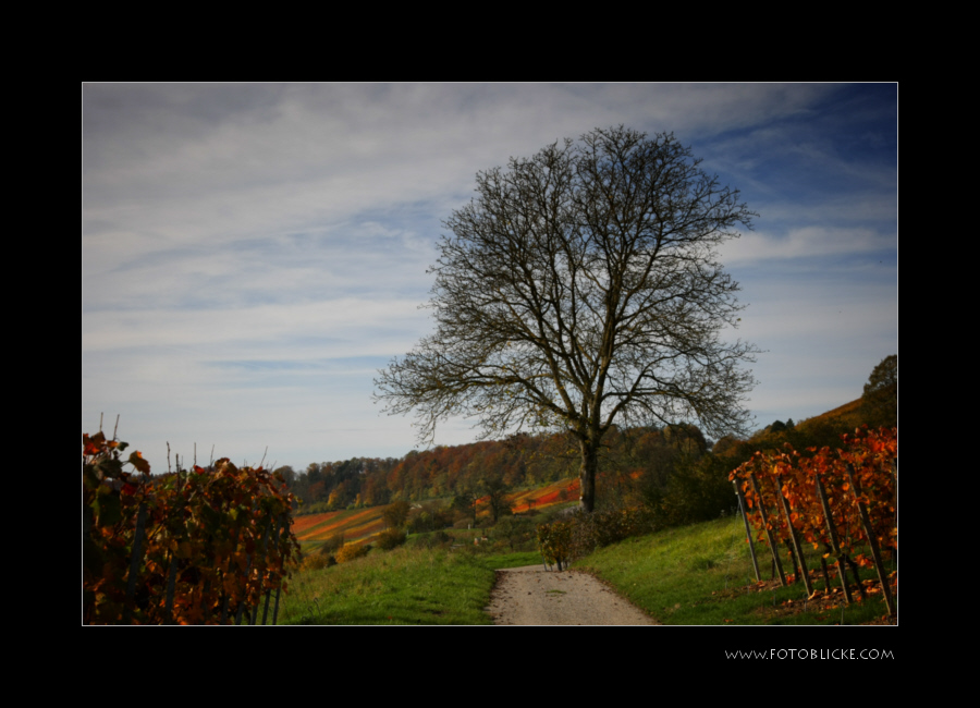 Herbst Reste