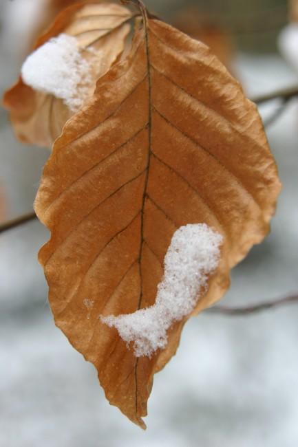 Herbst-Reste