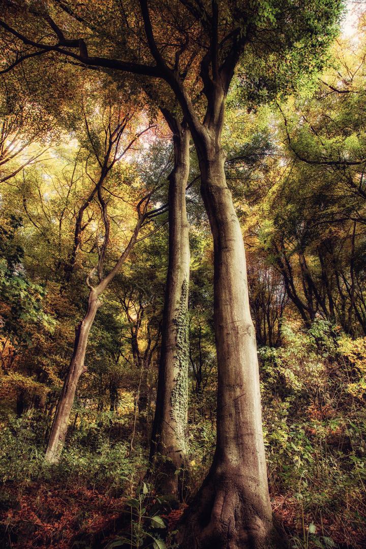 * Herbst-Riesen *