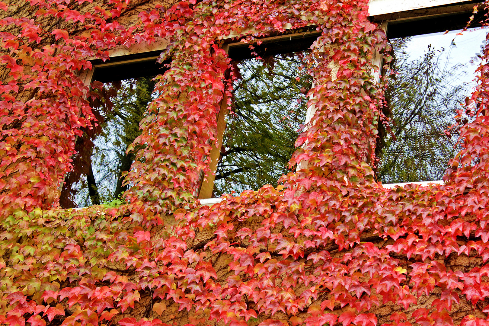 Herbst Rot !!!