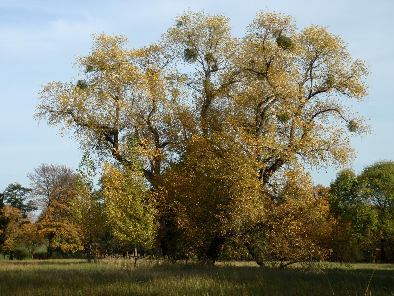 Herbst-Ruhezeit