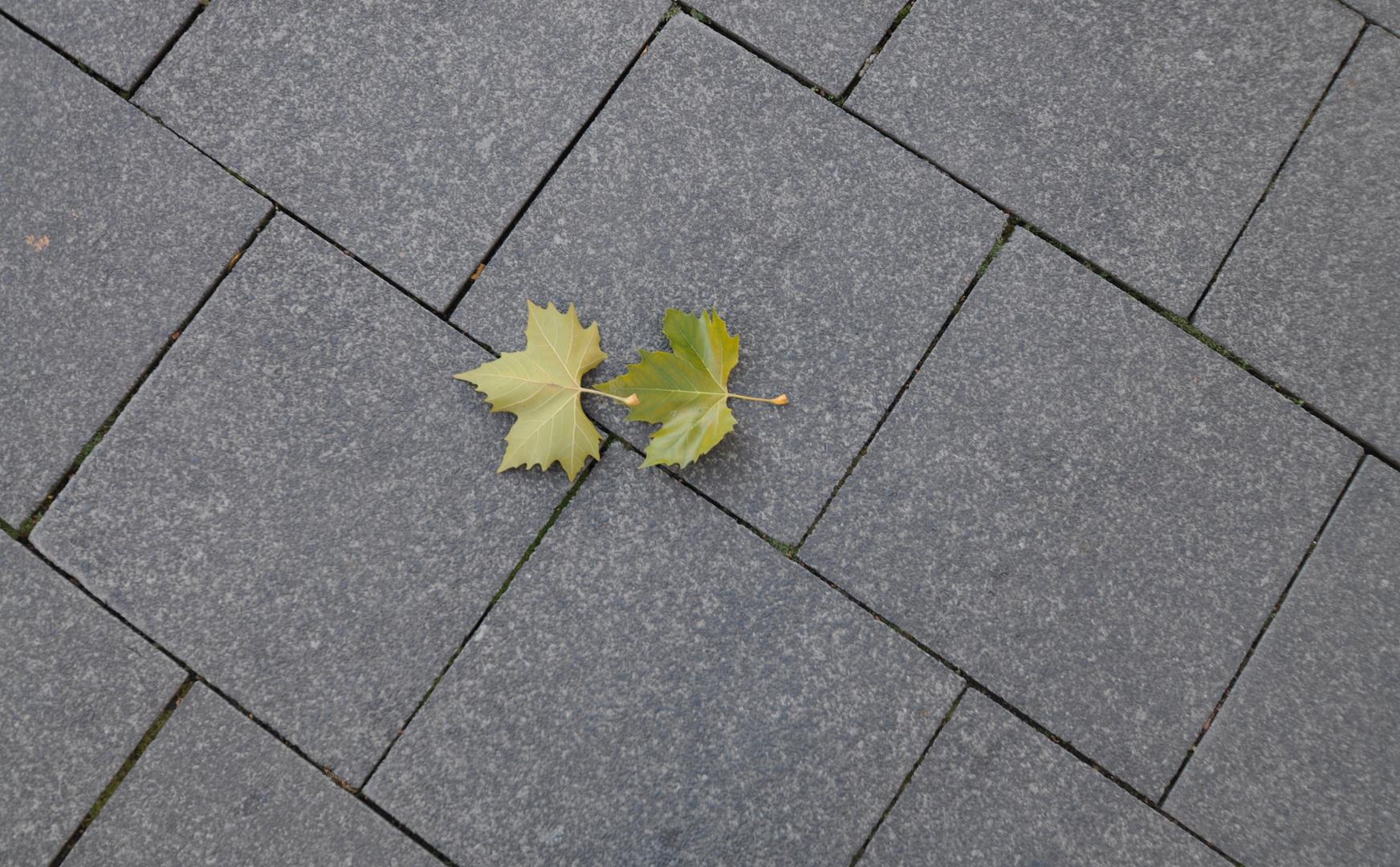 Herbst Schnappschuß