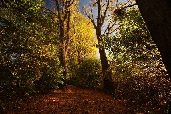 Herbst-->Schritt