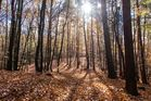 Herbst - Siebenhügel Wanderweg