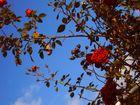 Herbst ??!? so kann jeder Tag beginnen..