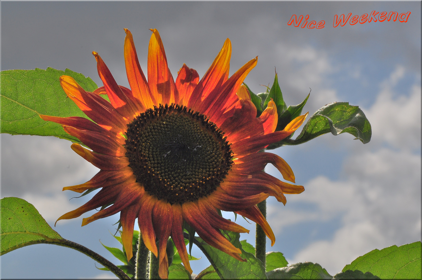 Herbst - Sonne