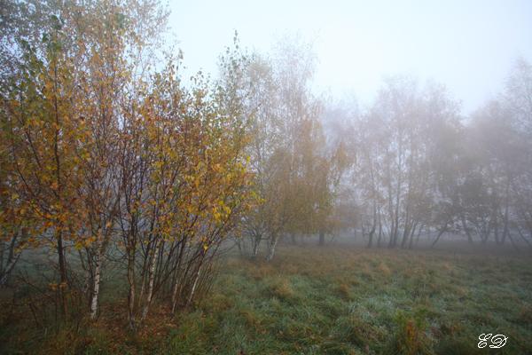 Herbst-Spaziergang im Nebel 10