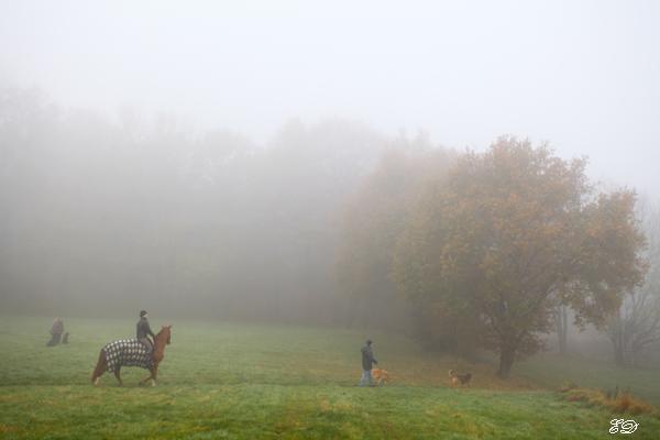 Herbst-Spaziergang im Nebel 2