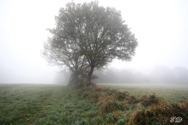 Herbst-Spaziergang im Nebel 3