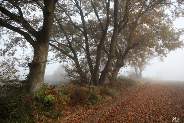 Herbst-Spaziergang im Nebel 8