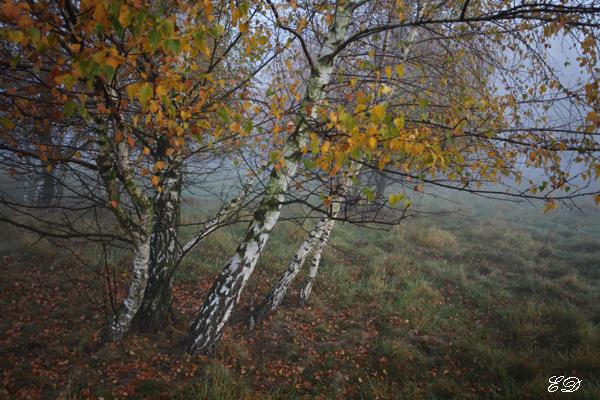 Herbst-Spaziergang im Nebel 9