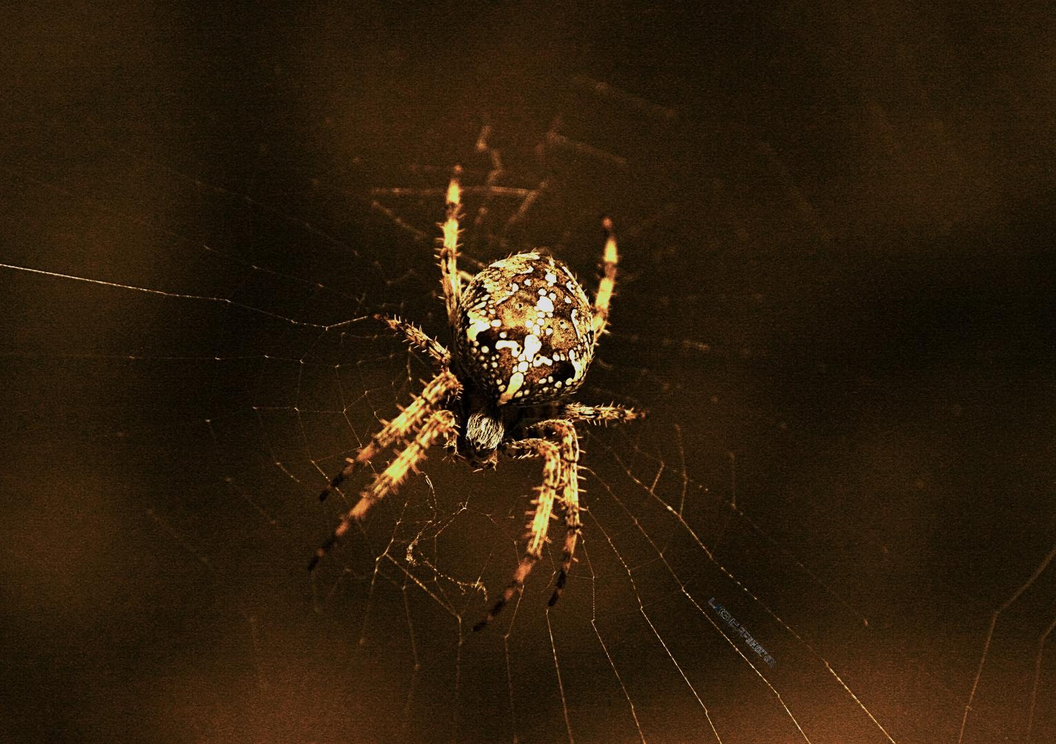 Herbst Spinne