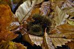 Herbst Spuren