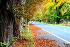 Herbst Street