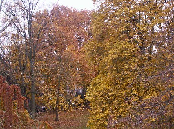 Herbst tag in Masstricht 2