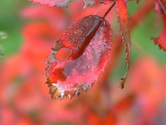 Herbst Tautropfen