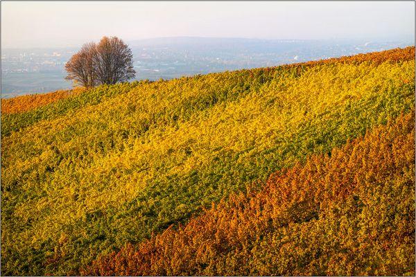 Herbst-Teppich