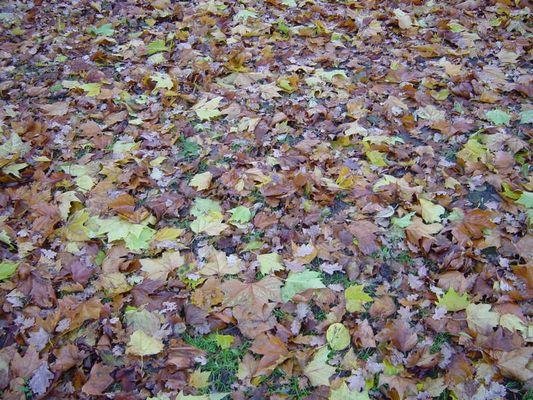 Herbst Total