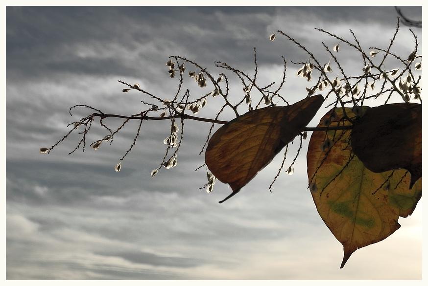Herbst : Tränen