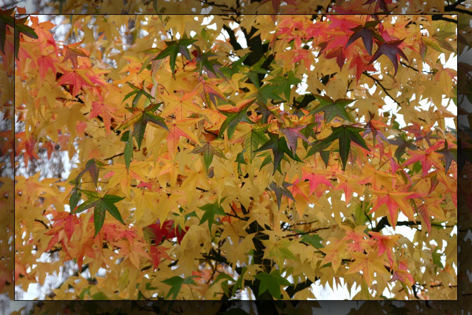 Herbst-Traum 1