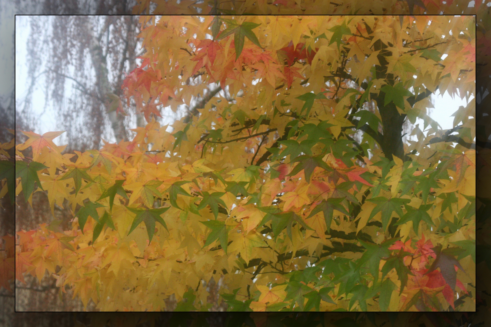 Herbst-Traum 2