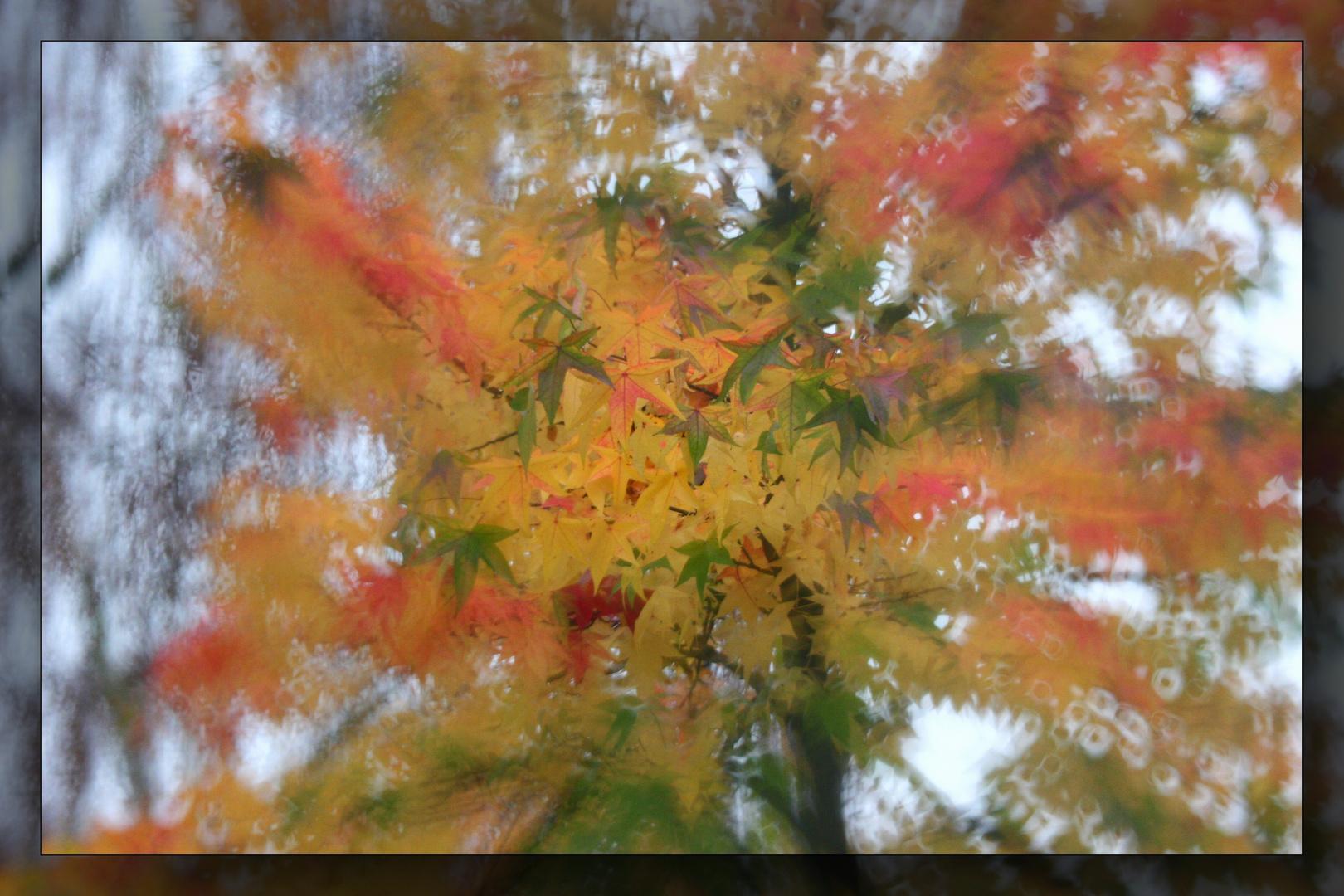 Herbst-Traum 3