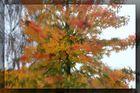 Herbst-Traum 4
