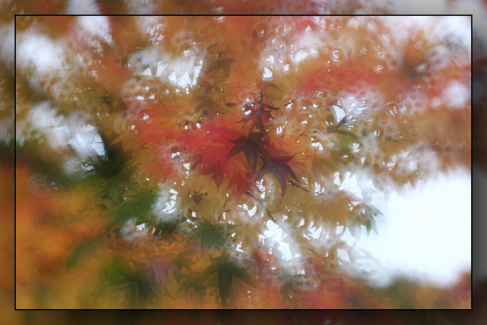Herbst-Traum 5