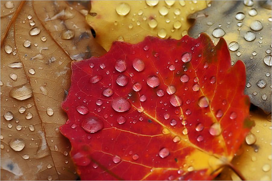 Herbst-Traum