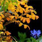 Herbst trifft Sommerblumen