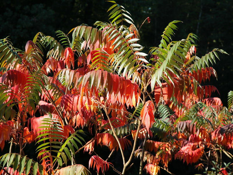 Herbst u Essig