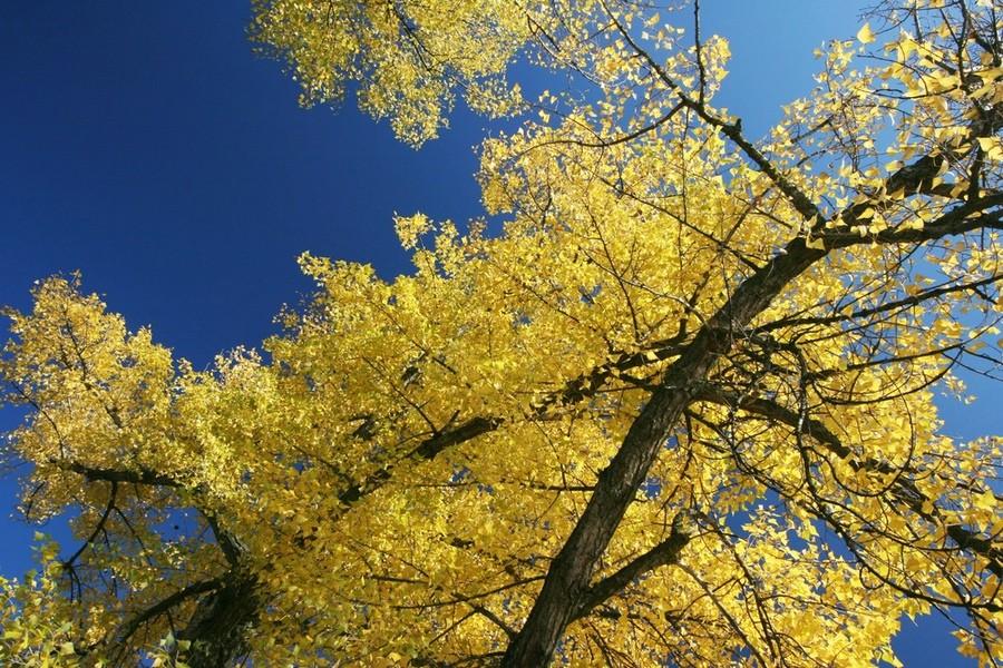 Herbst und Himmel