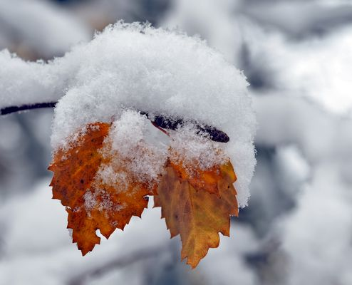 Herbst und Winter, beide aufs Mal! - L'automne et l'hiver en même temps!