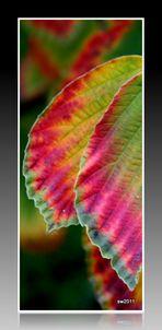 Herbst - verzauberte Nuss