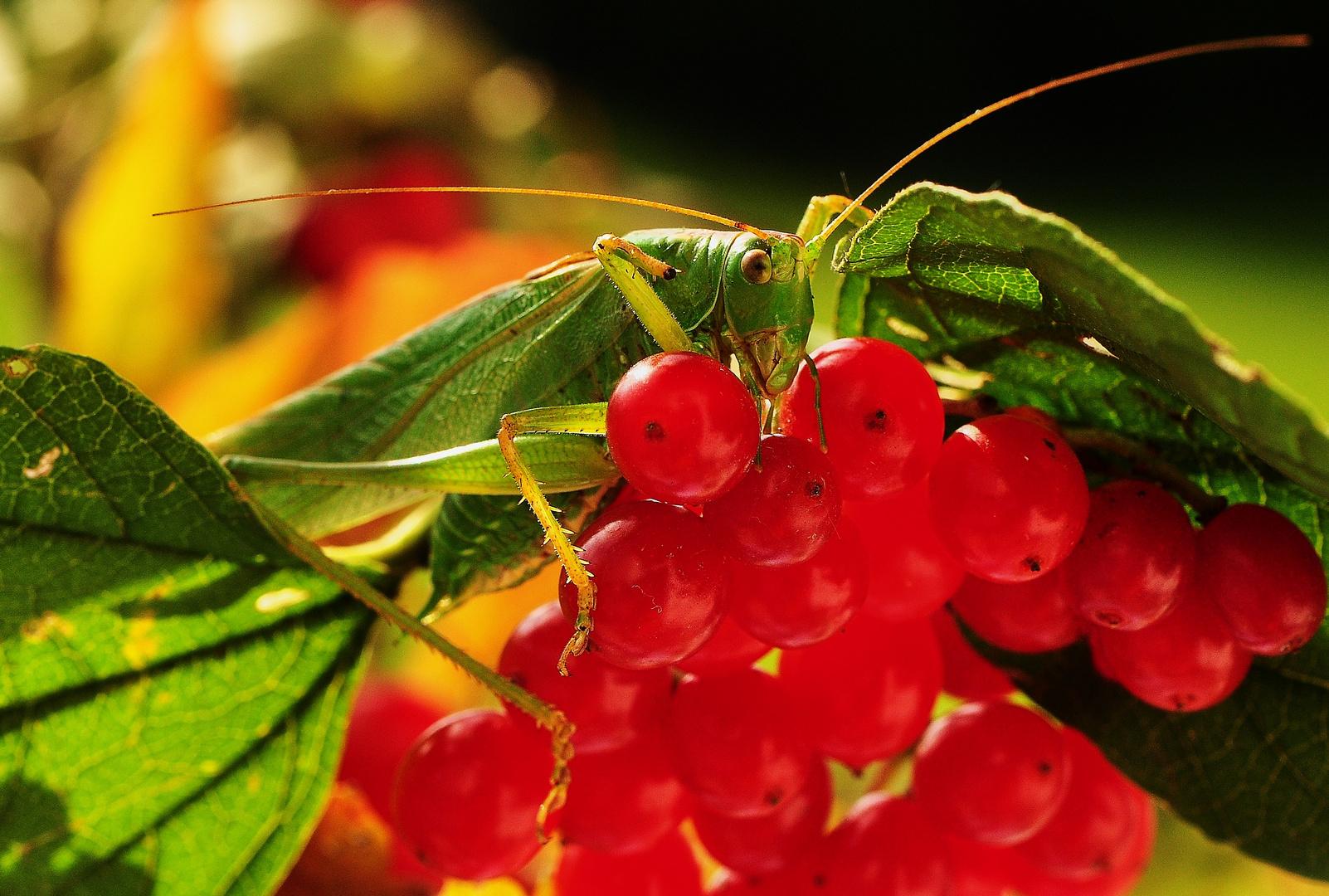 Herbst - Vitamine .......