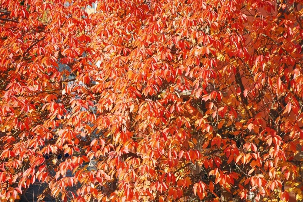 Herbst vor der Tür