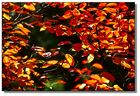 Herbst vor meiner Haustür