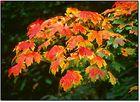 Herbst vor meiner Tür...