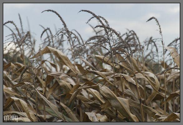 Herbst vor Niedersachsen