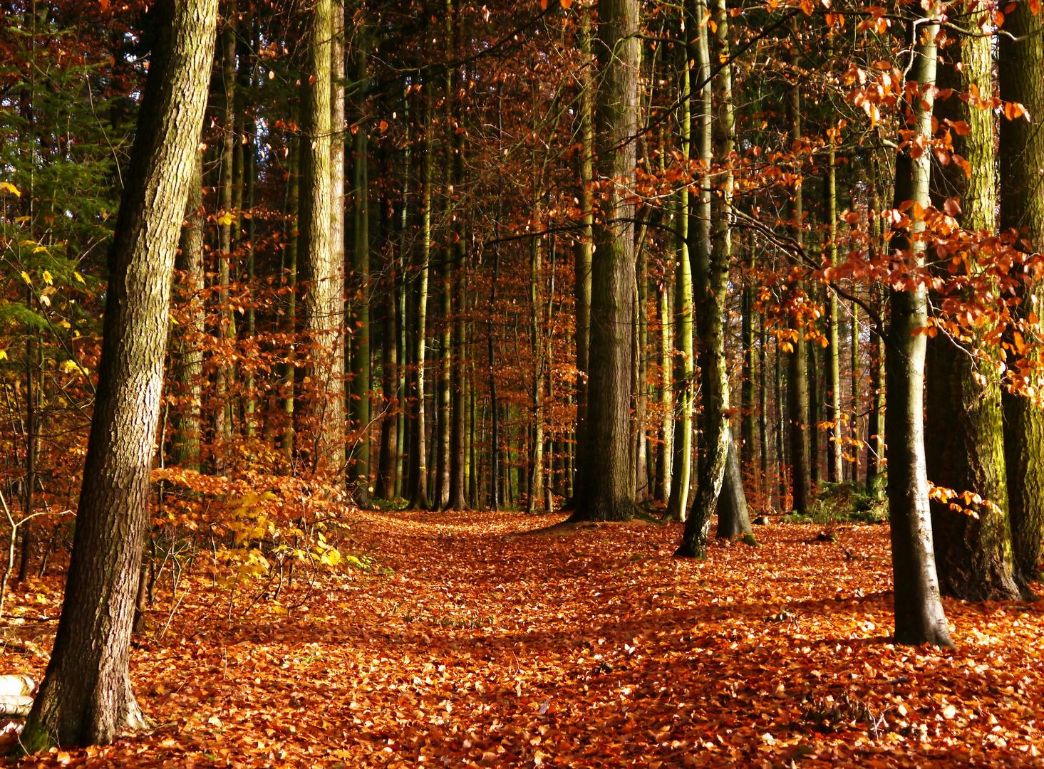 HerbstWaldWeg Foto & Bild  landschaft, wald, flora