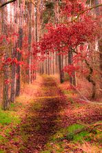 Herbst-Waldweg