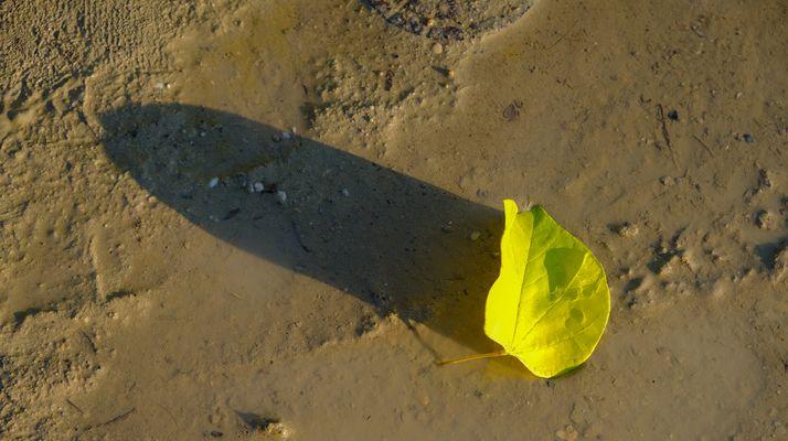 HERBST: Wenn die Schatten des Lebens länger werden.