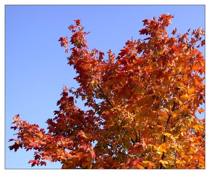 Herbst, wie ich ihn mag