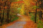 Herbst wie in meinen Träume