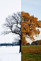 Herbst-Winter