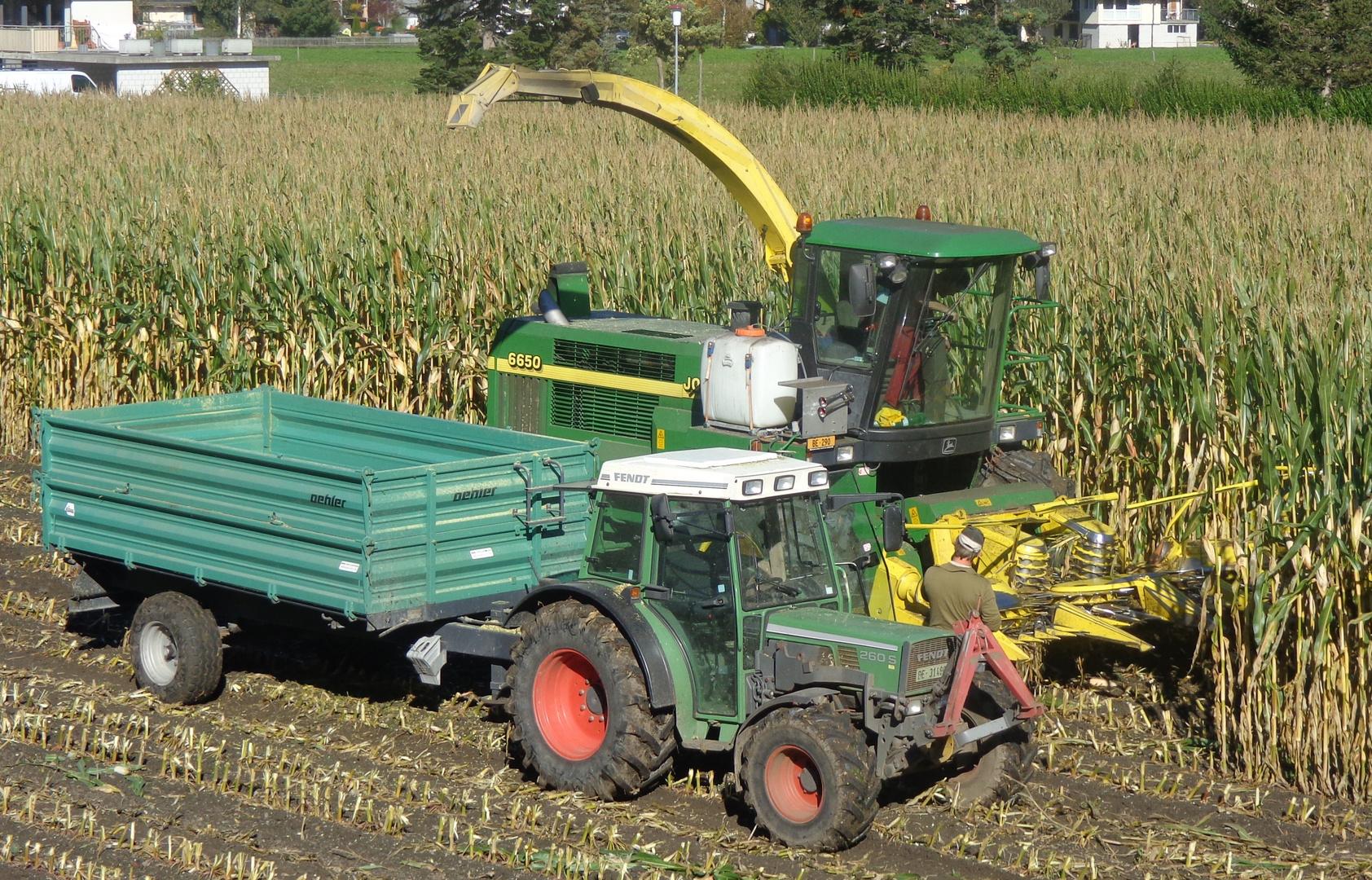 Herbst Zeit das Mais wird eingebracht
