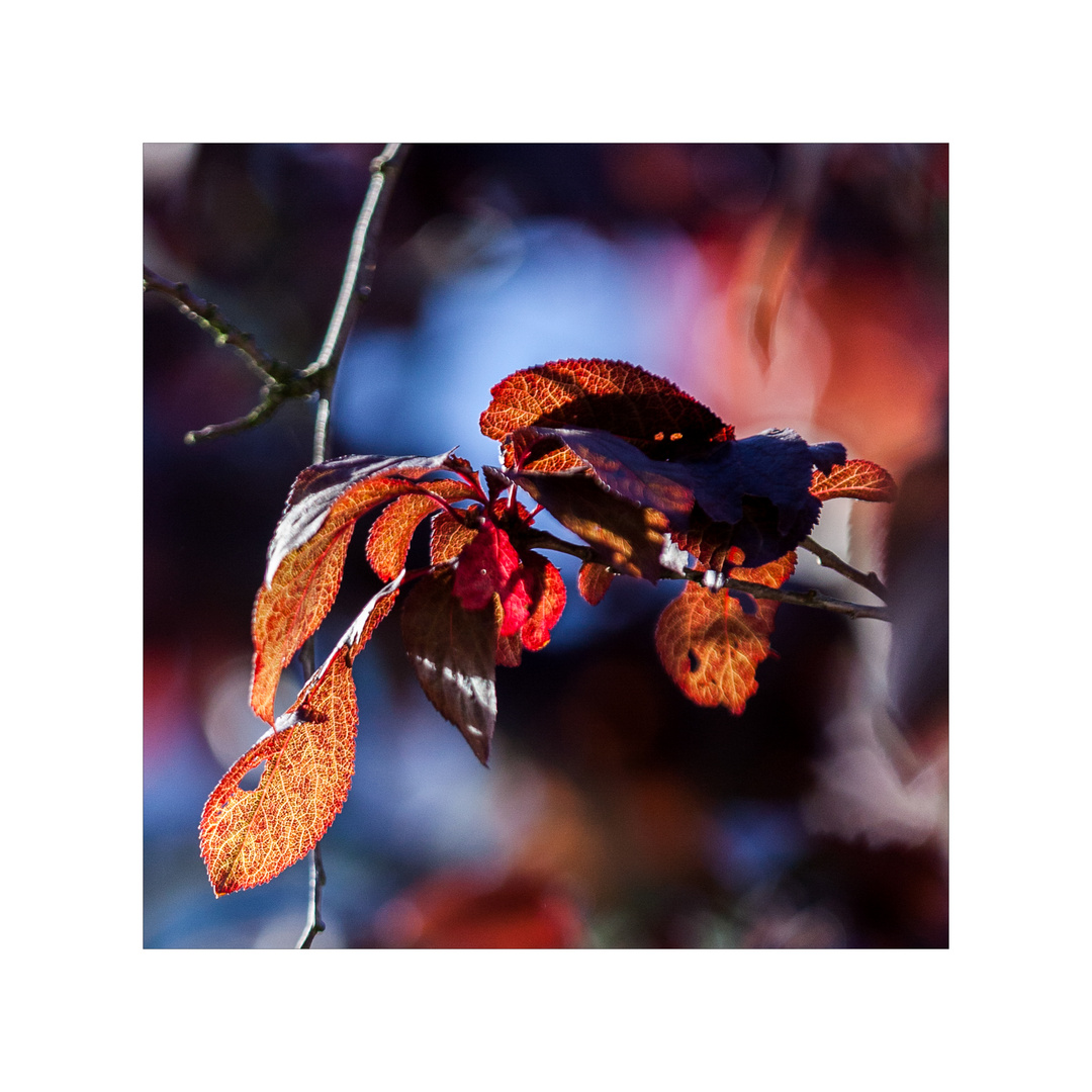 - Herbst - Zeit - Licht -