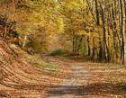 Herbst . Zeitlos