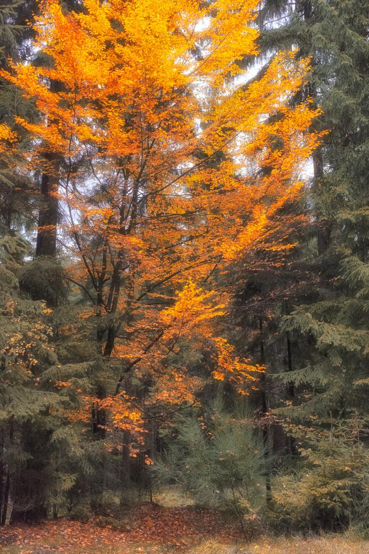 Herbst03