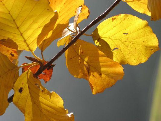 Herbst.1